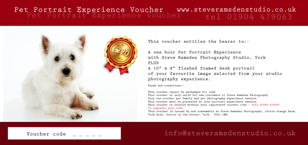 pet portrait photography voucher